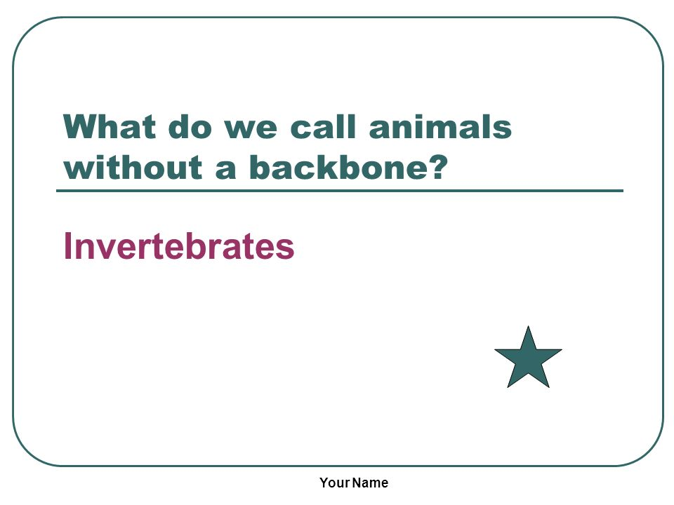 Your Name What do we call animals without a backbone? Invertebrates