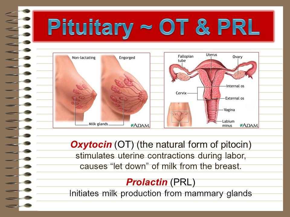 Oxytocin (OT) (the natural form of pitocin) stimulates uterine contractions during labor, causes let down of milk from the breast. Prolactin (PRL) Ini