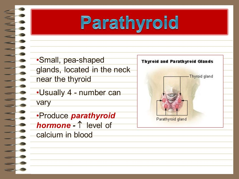 Small, pea-shaped glands, located in the neck near the thyroid Usually 4 - number can vary Produce parathyroid hormone - level of calcium in blood