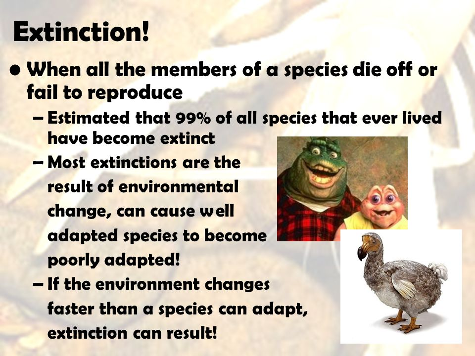 Extinction! When all the members of a species die off or fail to reproduce –Estimated that 99% of all species that ever lived have become extinct –Mos