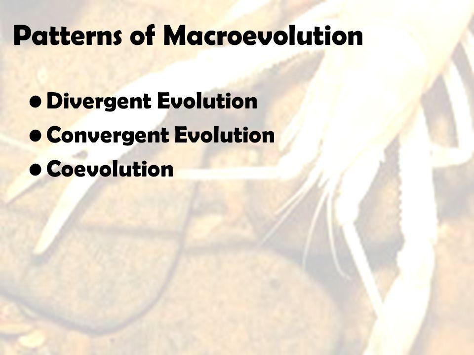 Patterns of Macroevolution Divergent Evolution Convergent Evolution Coevolution
