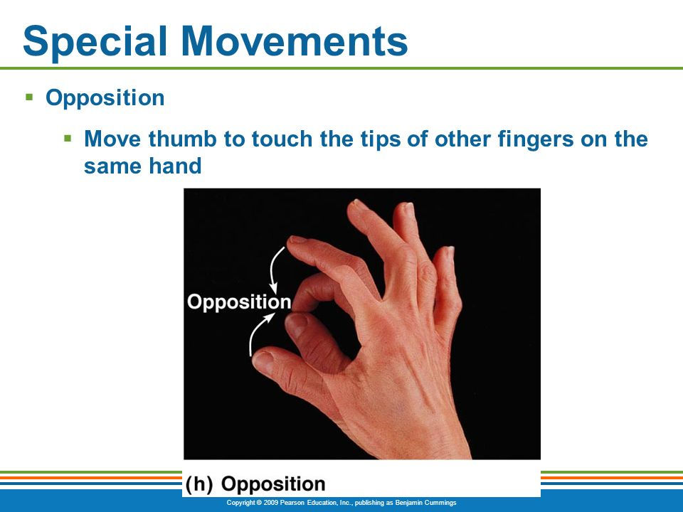 Copyright © 2009 Pearson Education, Inc., publishing as Benjamin Cummings Special Movements Opposition Move thumb to touch the tips of other fingers o