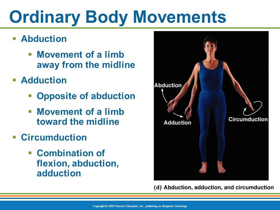 Copyright © 2009 Pearson Education, Inc., publishing as Benjamin Cummings Ordinary Body Movements Abduction Movement of a limb away from the midline A
