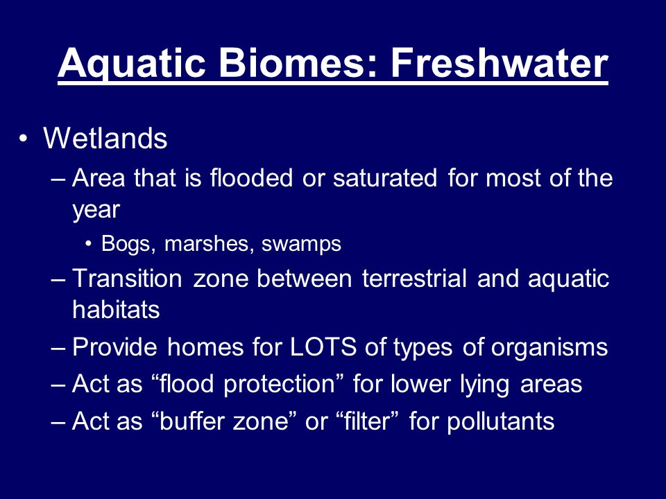 Wetlands –Area that is flooded or saturated for most of the year Bogs, marshes, swamps –Transition zone between terrestrial and aquatic habitats –Prov