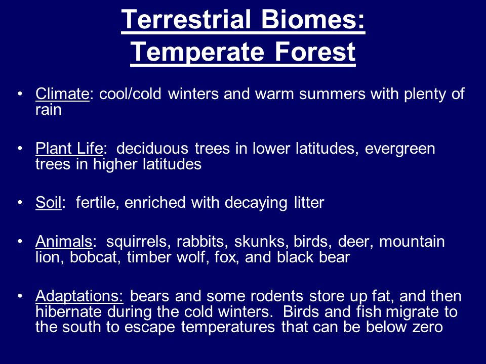 Terrestrial Biomes: Temperate Forest Climate: cool/cold winters and warm summers with plenty of rain Plant Life: deciduous trees in lower latitudes, e