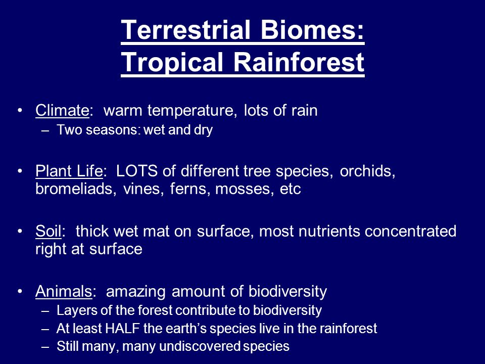 Terrestrial Biomes: Tropical Rainforest Climate: warm temperature, lots of rain –Two seasons: wet and dry Plant Life: LOTS of different tree species,