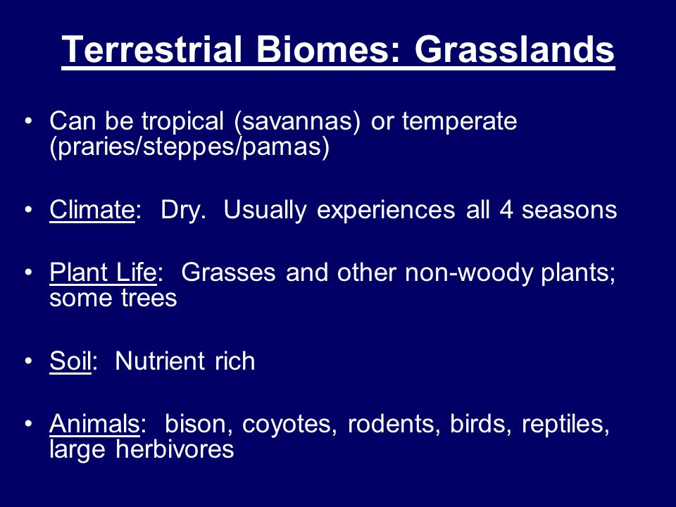 Terrestrial Biomes: Grasslands Can be tropical (savannas) or temperate (praries/steppes/pamas) Climate: Dry. Usually experiences all 4 seasons Plant L
