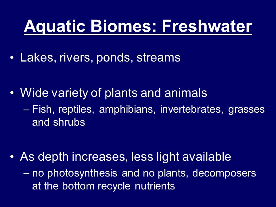 Estuaries –Area where freshwater mixes with salt water –Usually where a river empties into the ocean –Very productive ecosystems because they are always receiving fresh nutrients from the river AND the ocean Aquatic Biomes: Freshwater