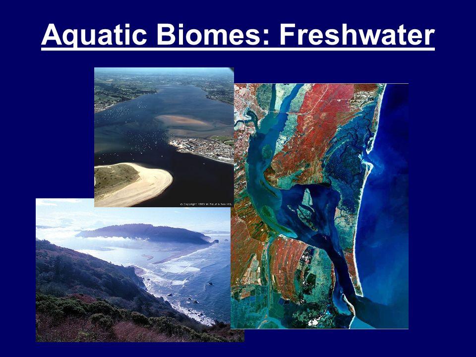 Terrestrial Biomes: Tropical Rainforest