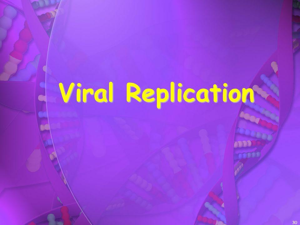 30 Viral Replication