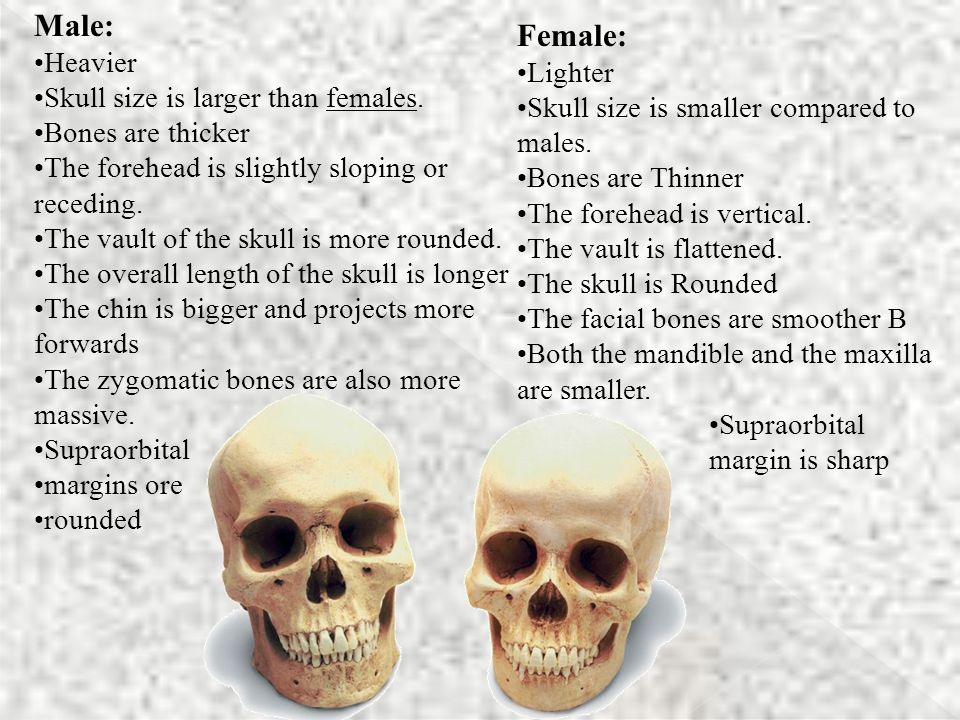 Male: Heavier Skull size is larger than females.