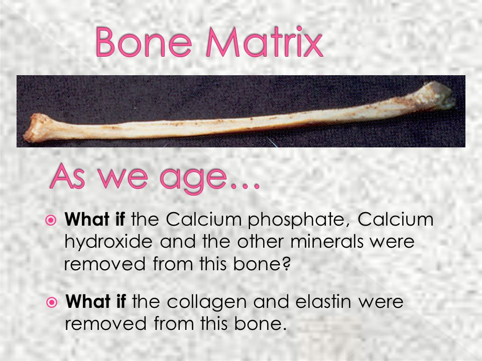 What if the collagen and elastin were removed from this bone.