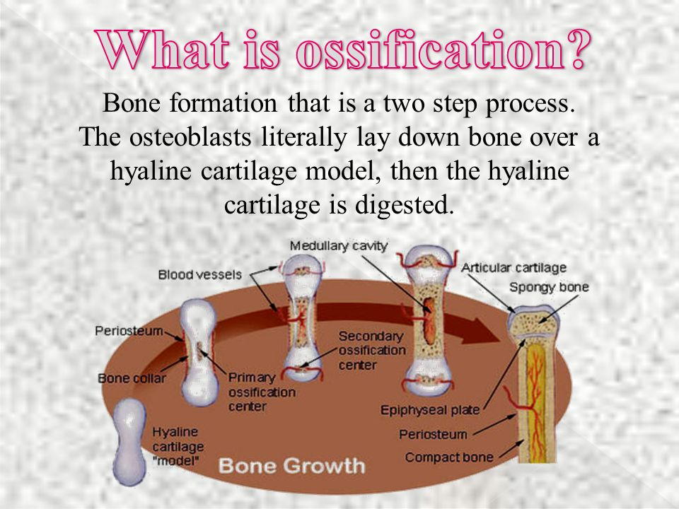 Bone formation that is a two step process.