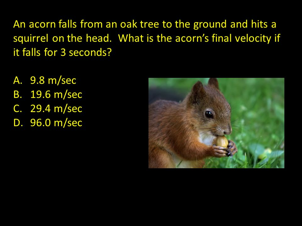 An acorn falls from an oak tree to the ground and hits a squirrel on the head. What is the acorns final velocity if it falls for 3 seconds? A.9.8 m/se