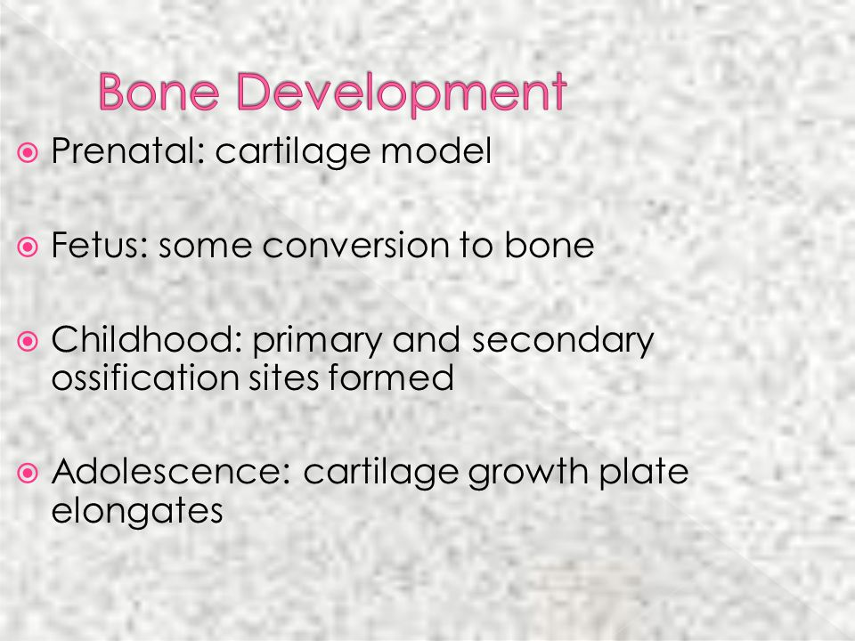 Prenatal: cartilage model Fetus: some conversion to bone Childhood: primary and secondary ossification sites formed Adolescence: cartilage growth plat