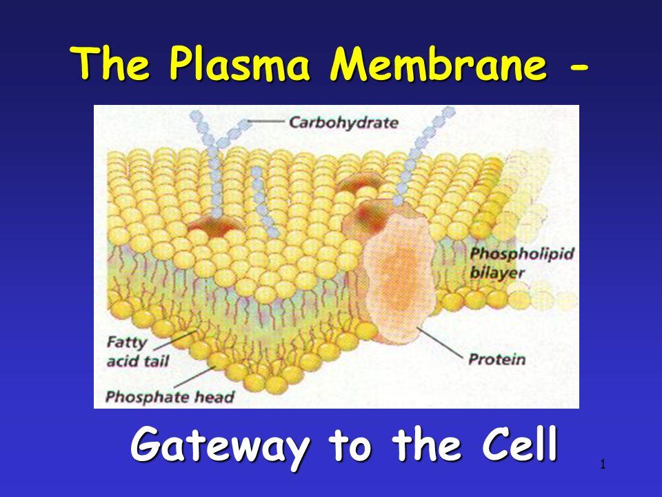1 The Plasma Membrane The Plasma Membrane - Gateway to the Cell