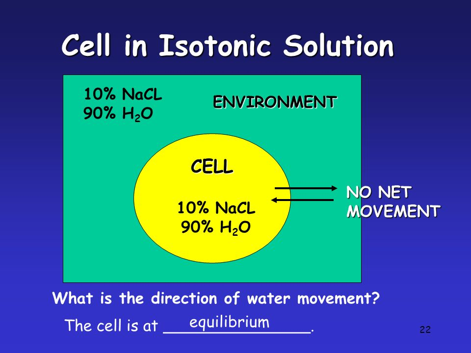 22 Cell in Isotonic Solution CELL 10% NaCL 90% H 2 O 10% NaCL 90% H 2 O What is the direction of water movement? The cell is at _______________. equil