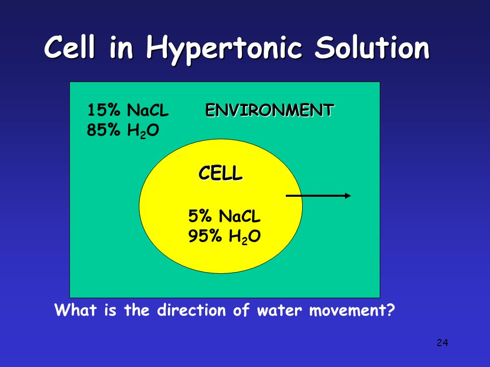 24 Cell in Hypertonic Solution CELL 15% NaCL 85% H 2 O 5% NaCL 95% H 2 O What is the direction of water movement? ENVIRONMENT