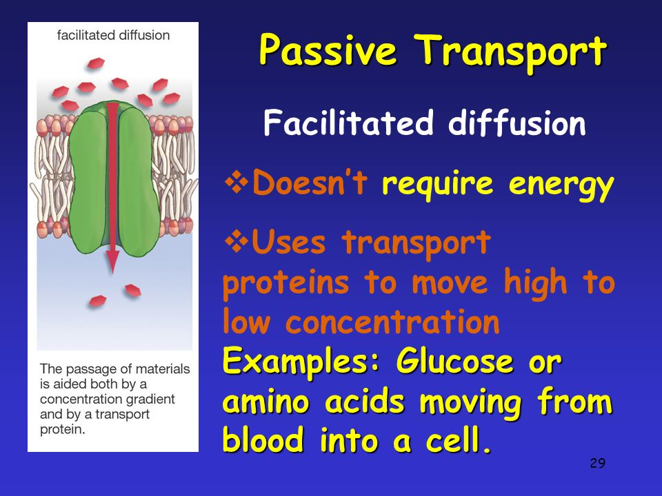 29 Passive Transport Facilitated diffusion Doesnt require energy Uses transport proteins to move high to low concentration Examples: Glucose or amino