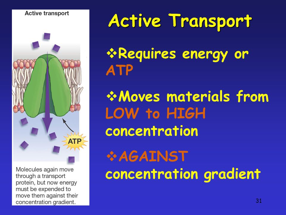 31 Active Transport Requires energy or ATP Moves materials from LOW to HIGH concentration AGAINST concentration gradient