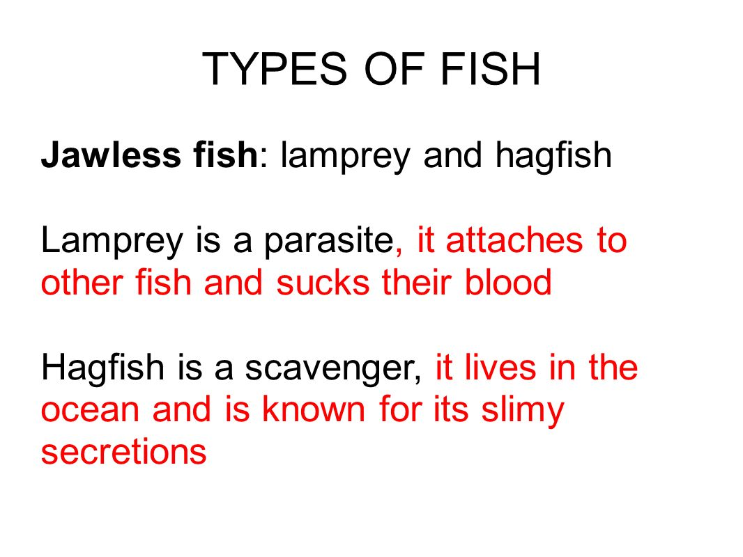 TYPES OF FISH Jawless fish: lamprey and hagfish Lamprey is a parasite, it attaches to other fish and sucks their blood Hagfish is a scavenger, it live
