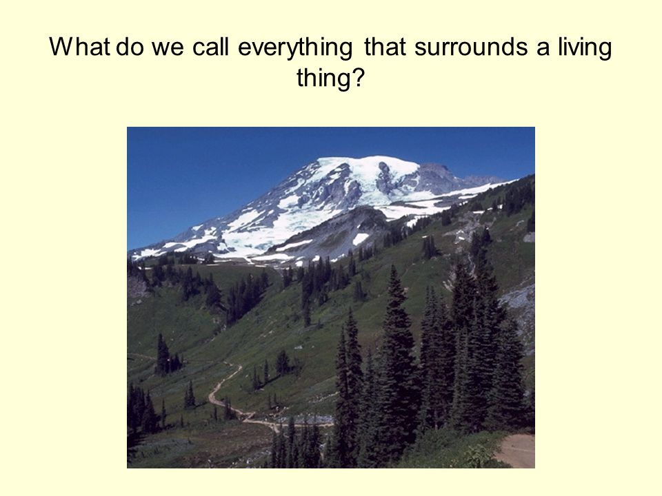 What do we call everything that surrounds a living thing?