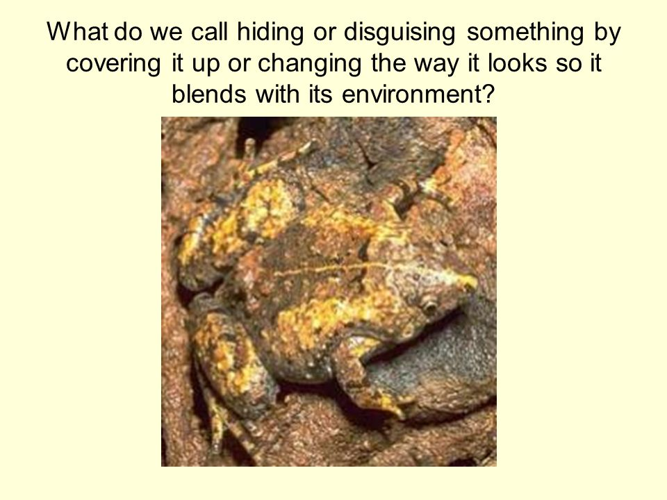 What do we call hiding or disguising something by covering it up or changing the way it looks so it blends with its environment?