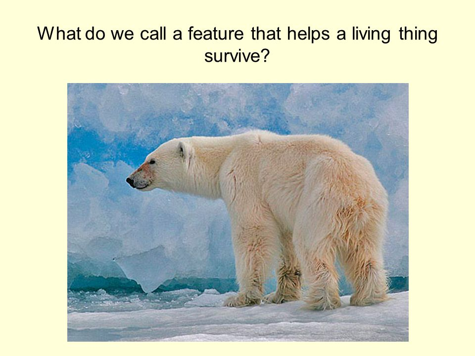 What do we call a feature that helps a living thing survive?