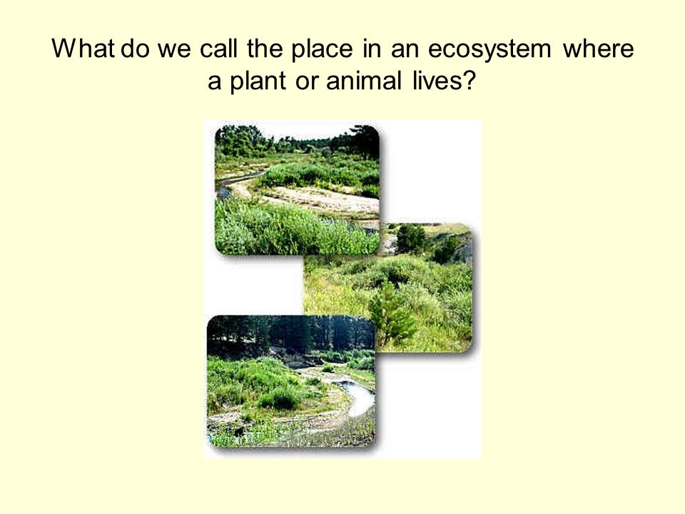 What do we call the place in an ecosystem where a plant or animal lives?
