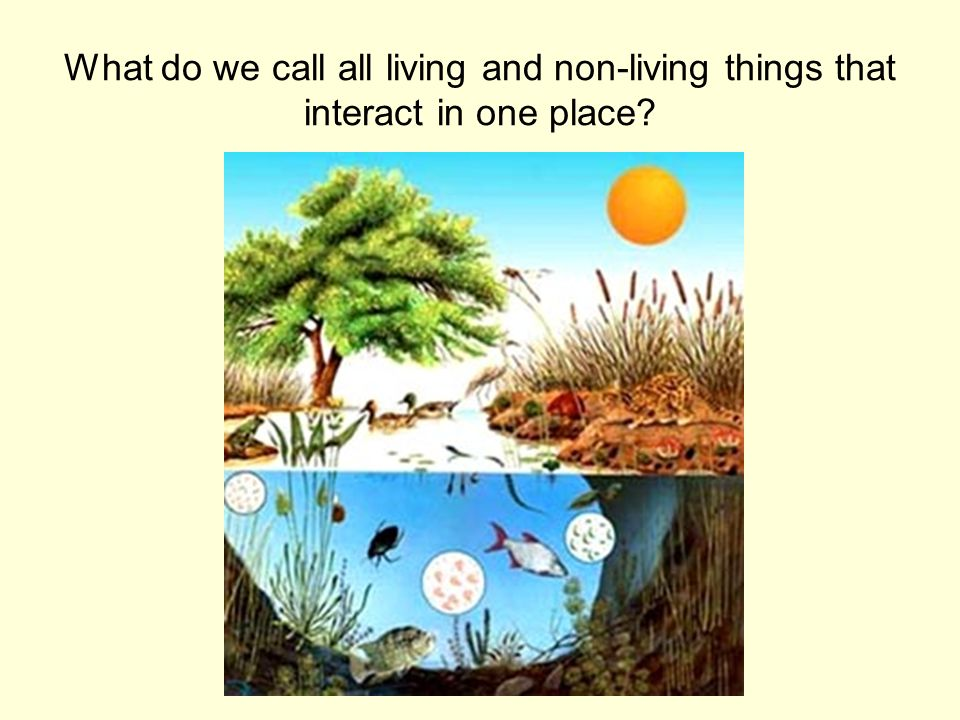 What do we call all living and non-living things that interact in one place?