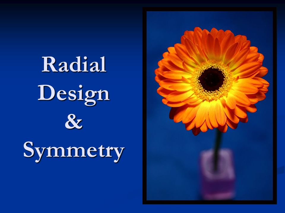 Symmetry is where one part of an image is balanced or mirrored by the other side.