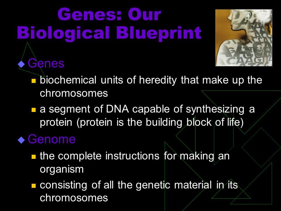 DNA & RNA DNA: Deoxyribonucleic acid.
