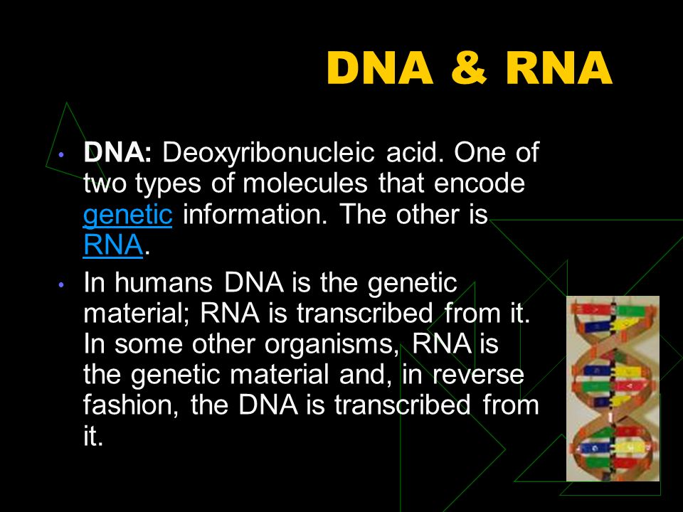 DNA & RNA DNA is a double-stranded molecule held together by weak hydrogen bonds between base pairs of nucleotides.