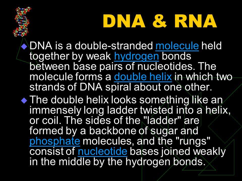 Nucleotide Nucleotide: A subunit of DNA or RNA.
