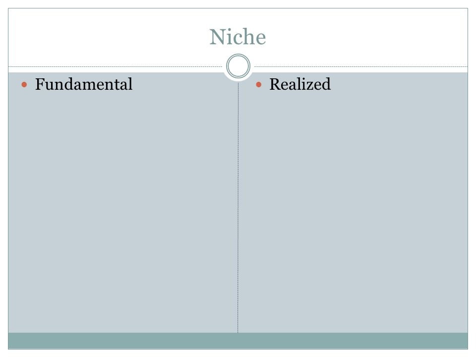 Niche Fundamental Realized