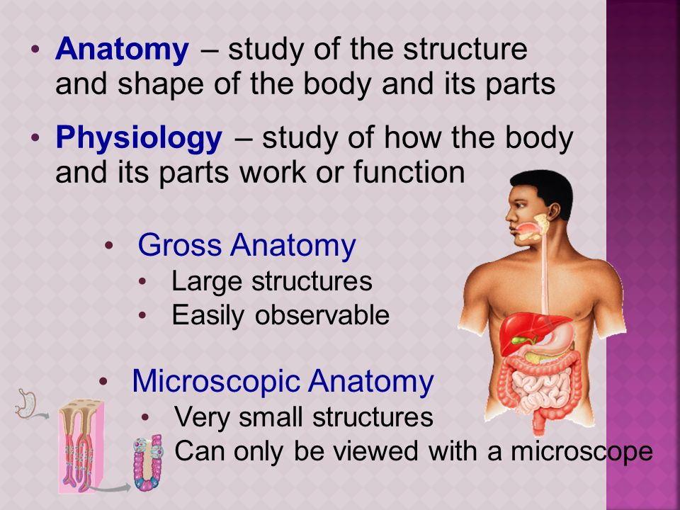 Anatomy – study of the structure and shape of the body and its parts Physiology – study of how the body and its parts work or function Gross Anatomy L