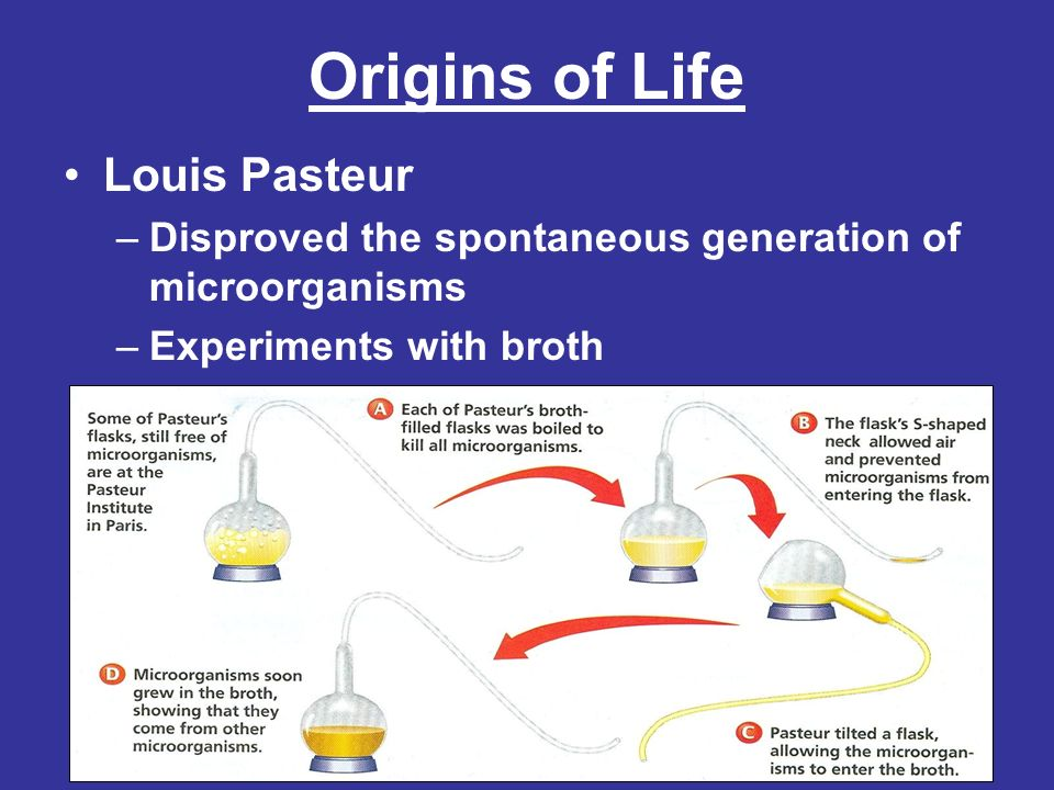 Origins of Life Pasteurs experiments showed that microorganisms do not arise from the broth alone even in the presence of air Biogenesis became the accepted theory about the origin of life –Biogenesis is the idea that living organisms only come from other living organisms