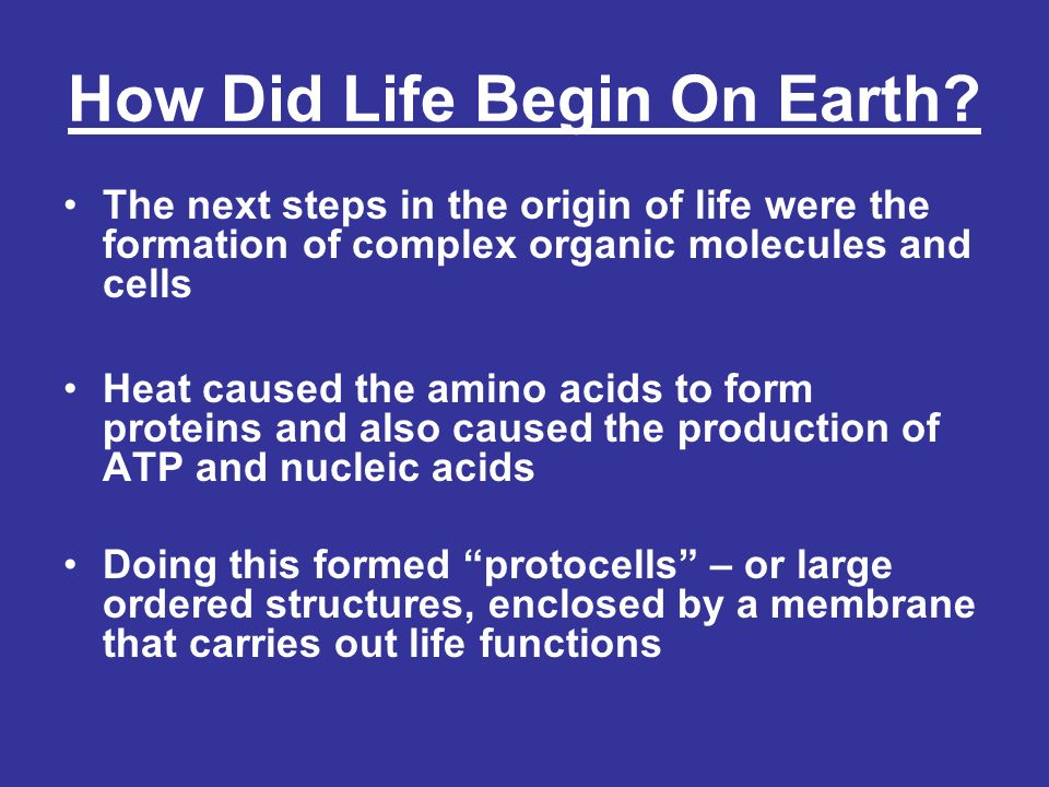 The First True Cells First forms of life were prokaryotes that likely evolved from protocells –Anaerobic Heterotrophs –Later, early prokaryotes evolved to be able to make their own food These were similar to archaebacteria and used chemosynthesis to produce their food