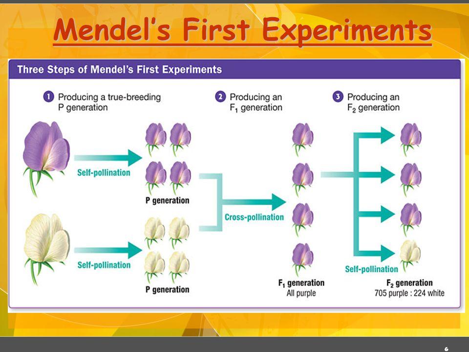 6 Mendels First Experiments