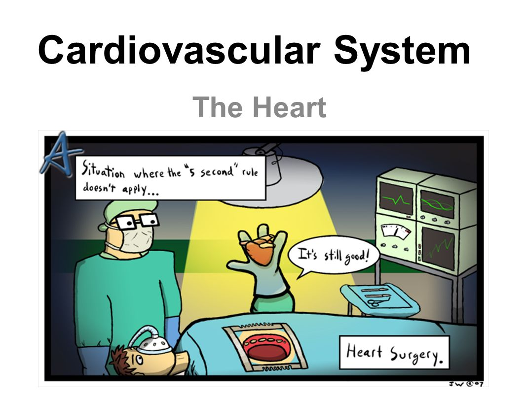 The Cardiovascular System A closed system of the heart and blood vessels –The heart pumps blood –Blood vessels allow blood to circulate to all parts of the body The function of the cardiovascular system is to deliver oxygen and nutrients and to remove carbon dioxide and other waste products