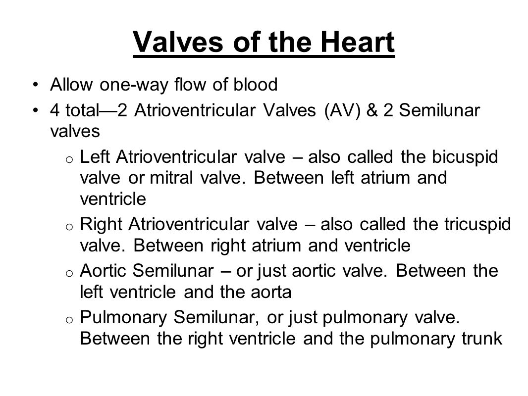 Valves of the Heart Allow one-way flow of blood 4 total2 Atrioventricular Valves (AV) & 2 Semilunar valves o Left Atrioventricular valve – also called