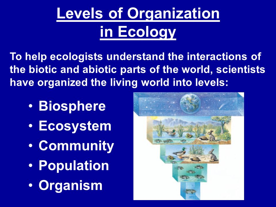 Levels of Organization in Ecology Biosphere Ecosystem Community Population Organism To help ecologists understand the interactions of the biotic and a