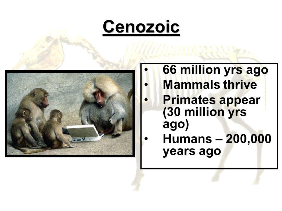 Cenozoic 66 million yrs ago Mammals thrive Primates appear (30 million yrs ago) Humans – 200,000 years ago