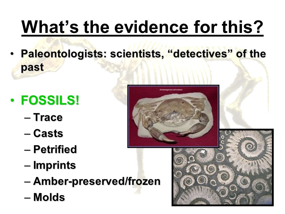 Whats the evidence for this? Paleontologists: scientists, detectives of the pastPaleontologists: scientists, detectives of the past FOSSILS!FOSSILS! –