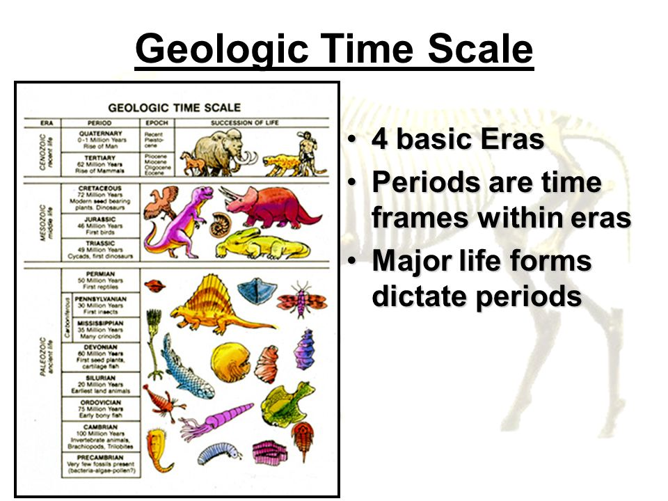 Geologic Time Scale 4 basic Eras4 basic Eras Periods are time frames within erasPeriods are time frames within eras Major life forms dictate periodsMa