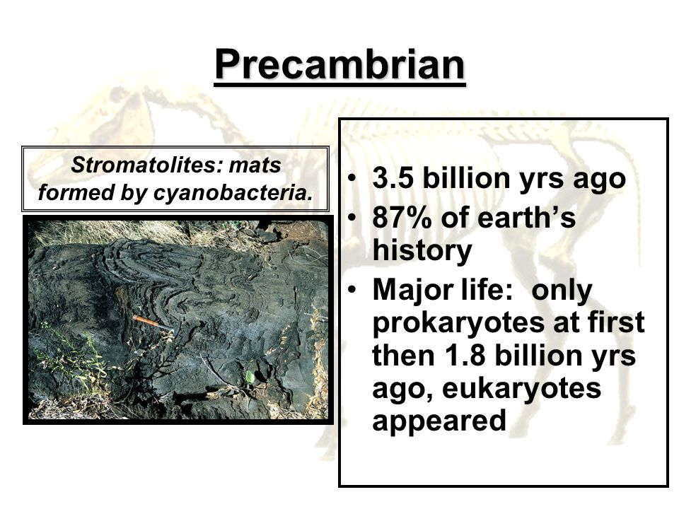 Precambrian 3.5 billion yrs ago 87% of earths history Major life: only prokaryotes at first then 1.8 billion yrs ago, eukaryotes appeared Stromatolite