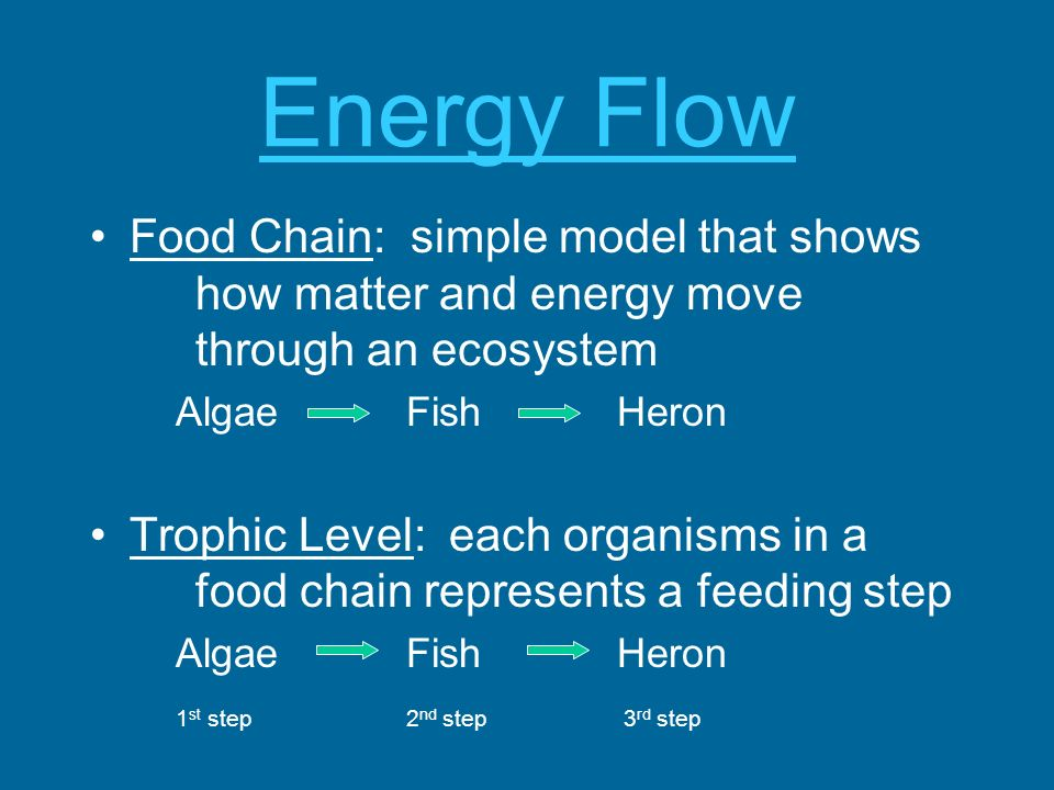 Energy Flow Food Chain: simple model that shows how matter and energy move through an ecosystem AlgaeFishHeron Trophic Level: each organisms in a food