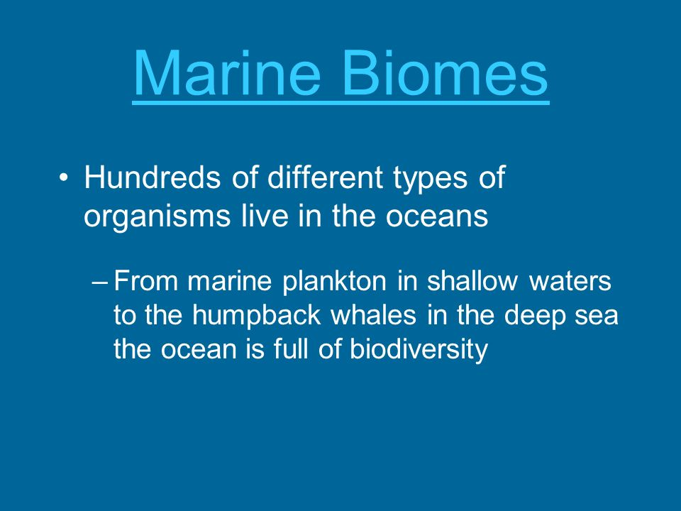 Marine Biomes Hundreds of different types of organisms live in the oceans –From marine plankton in shallow waters to the humpback whales in the deep s