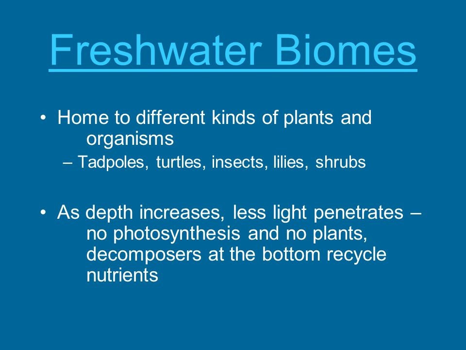 Freshwater Biomes Home to different kinds of plants and organisms –Tadpoles, turtles, insects, lilies, shrubs As depth increases, less light penetrate