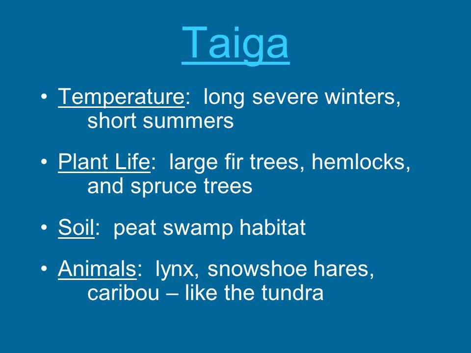 Taiga Temperature: long severe winters, short summers Plant Life: large fir trees, hemlocks, and spruce trees Soil: peat swamp habitat Animals: lynx,